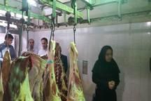 55 تن گوشت قرمز در ماکو تولید شد