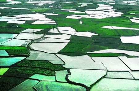 اجرای طرح کاداستـر در بیش از 3 هزار هکتار از اراضی کشاورزی پیرانشهر