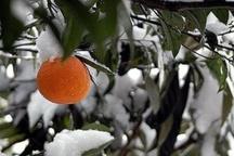 هشدار جهاد کشاورزی مازندران به باغداران و گلخانهداران