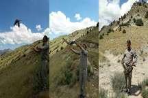 رهاسازی 10 بهله پرنده شکاری در طبیعت کلات
