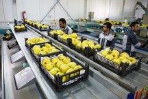 بیش از نیمی از محصولات کشاورزی تهران فرآوری می شود
