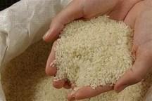 توزیع برنج با قیمت تعادلی در نظرآباد آغاز شد