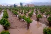 خسارت 95 میلیاردی سیل به بخش کشاورزی بابل
