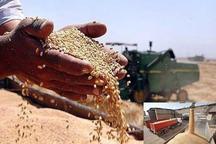 آغاز خرید گندم مازاد بر نیاز کشاورزان گیلان به نرخ تضمینی
