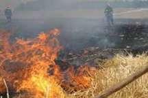 آتش سوزی در  گندمزارهای  سبزوار
