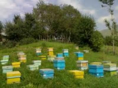 سهم 4 درصدی اهر از کندوهای زنبور عسل آذربایجان شرقی