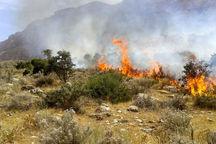آتش بار هم در منطقه حفاظت شده قلاجه گیلانغرب شعلهور شد