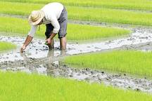 تلاش مسئولان قائمشهری برای جلوگیری از خسارت  خشکسالی