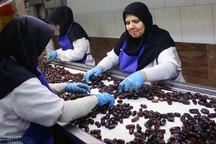 صنایع بسته بندی و برند سازی خرما در دلگان راه اندازی شد