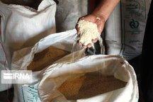 چشم کشاورزان مازندرانی به حاشیه سود بازار برنج تهران