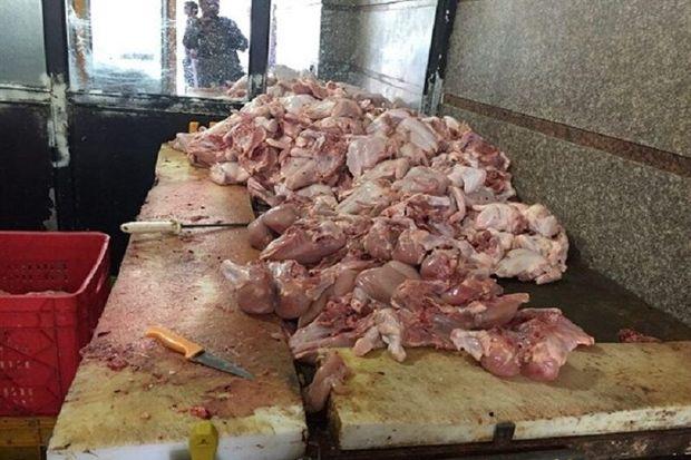 ۲۲ واحد متخلف مرغ و ماهی در قزوین قضایی شدند
