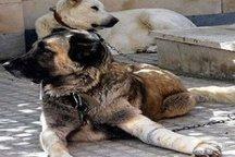 دستگیری فرد سگ آزار در چایپاره به کجا رسید