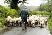 گله دار خوزستانی که تلف شدن گوسفندانش را به گردن محیط زیست نینداخت