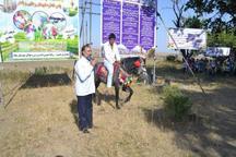 جشنواره بازی های محلی در بخش کندوان میانه