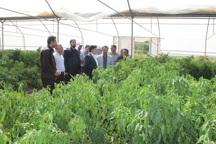عملیات گازرسانی به واحدهای گلخانه ای قصرشیرین آغاز شد