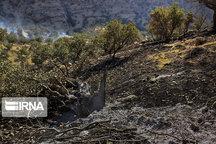 ۲۰هکتار از مراتع مشجر گیلانغرب در آتش سوخت