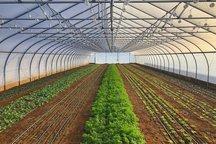 محصولات گلخانهای البرز به خارج از کشور صادر می شود