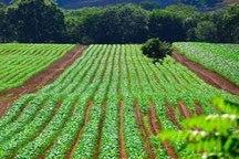 اجرای طرح کاداستـر در 3 هزار و 750 هکتار زمین کشاورزی پیرانشهر