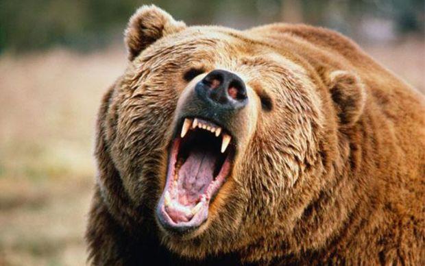 خرس یک زن را در دنا مجروح کرد
