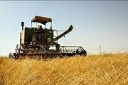آغاز برداشت گندم از مزارع باغملک  اختصاص ۲۱ هزار هکتار از اراضی شهرستان به کشت گندم