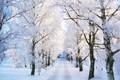 اولین برف زمستانی فردا ایلام را سفیدپوش می کند