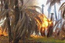آتش سوزی به 950 اصله نخل در آبپخش بوشهر آسیب وارد کرد