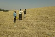 در سه ماهه اول سال جاری 27 هکتار از اراضی ملی شهرستان چگنی رفع تصرف شد