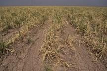 230میلیاردریال خسارت خشکسالی و سیل 95 خوزستان تامین شد