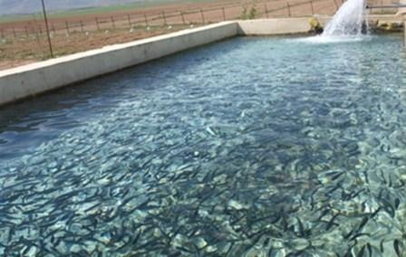 2 میلیون قطعه بچه ماهی قزل آلا در استخرهای استان قزوین رها سازی شد