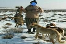 فضای مجازی شکارچی غیرمجاز روباه را در سردشت گرفتار کرد