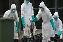 شیوع گسترده آنفلوانزای پرندگان در چین