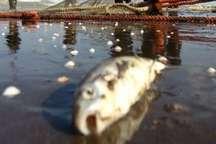 چوب حراج بر سلامت ماهیان پرورشی مازندران