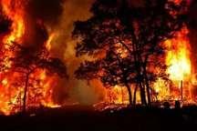 آتش زدن مزارع در دزفول موجب سرایت آتش به جنگل شد  معرفی 20 کشاورز متخلف به دستگاه قضایی
