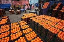 عرضه پرتقال با قیمت 4200 تومان در 60 میدان میوه و تره بار تهران