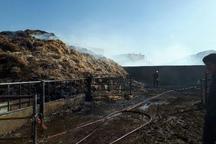 آتش سوزی یک گاوداری در تپه سلام مشهد