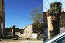 شهرداری سلماس هیچگونه مجوزی برای قطع درختان معابر شهری صادر نکرده است