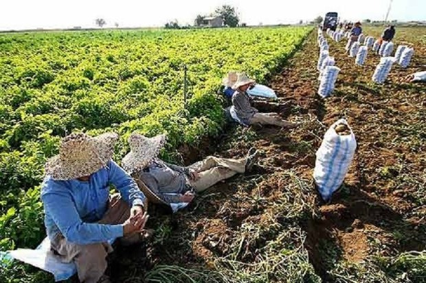 کشاورزان قمی تحت پوشش تامین اجتماعی نیستند