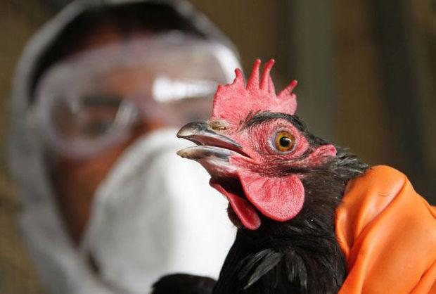 تشدید پایش زیستگاههای گلستان برای جلوگیری از شیوع آنفلوانزای پرندگان