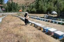 تعاون روستایی برای 120 بانوی گرمساری شغل ایجاد کرد