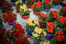 500 هزار شاخه گل و گیاه زینتی در سبزوار تولید شد