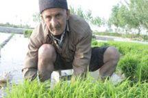 خردهمالکی مشکل سرمایهگذاران در بخش کشاورزی مازندران
