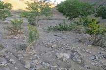 خسارت 10.5میلیارد ریالی سیل به روستاهای بخش قهستان شهرستان درمیان
