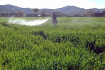 سمپاشی 466هزار هکتار زمین زراعی در حال انجام است