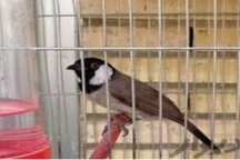 10 پرنده وحشی کمیاب در فلاورجان اصفهان کشف و رها سازی شد