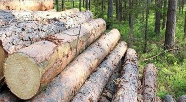 تشریح جزئیات قطع درختان حاشیه رود ارس