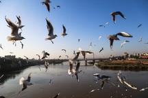 سرشماری پاییزه پرندگان برای در  زریبار انجام شد