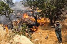 آتش سوزی در مراتع قزوین 43 درصد کاهش یافته است