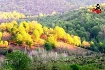 اجرای طرح کاداستر در270 هزار هکتار از اراضی کشاورزی استان زنجان