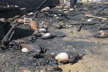 آتشسوزی ۱۵۰ راس گوسفند را در پارسآباد تلف کرد