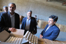 فرماندار: واحدهای تولید مرغ مادر در مراغه حمایت می شوند